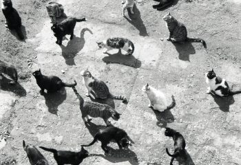 ferral cats